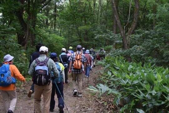 写真:山の中でウォーキングする団体